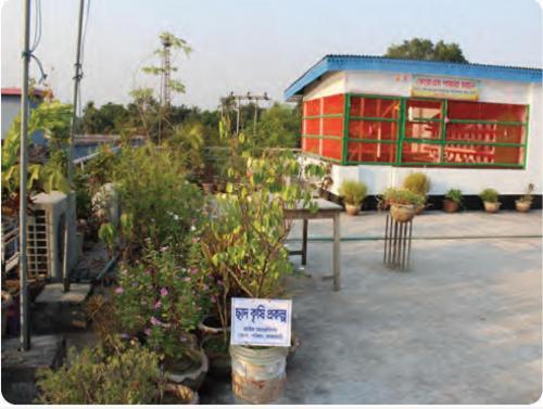 রাজবাড়ী জেলা কে.কে.এস. এর ছাদ কৃষি প্রকল্প